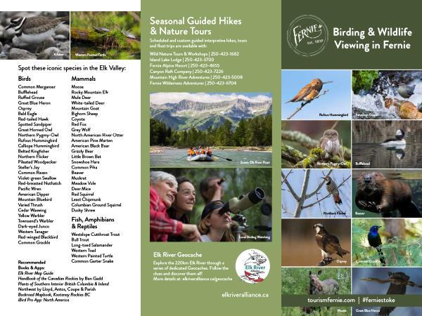 Birding & Wildlife Viewing Guide in Fernie Sept 2021