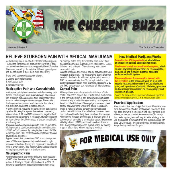 The Current Buzz Newspaper The Current Buzz Paper