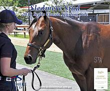 Sledmere Stud - 2018 Inglis Classic Yearling Sale draft