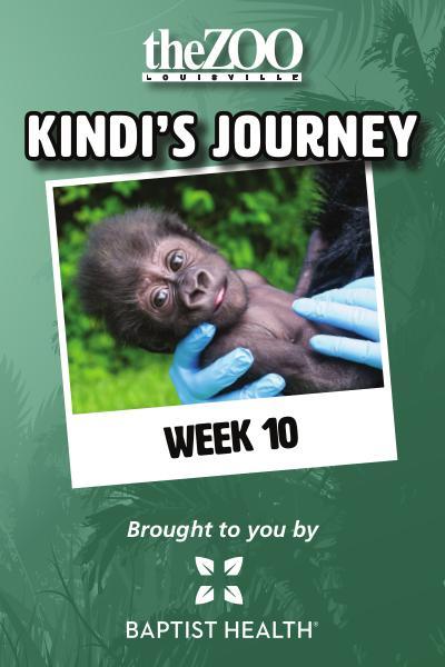 Kindi's Journey Kindi's Journey: Week Ten