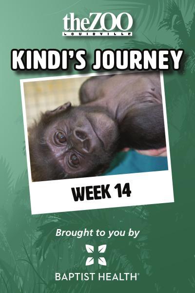 Kindi's Journey Kindi's Journey: Week 14