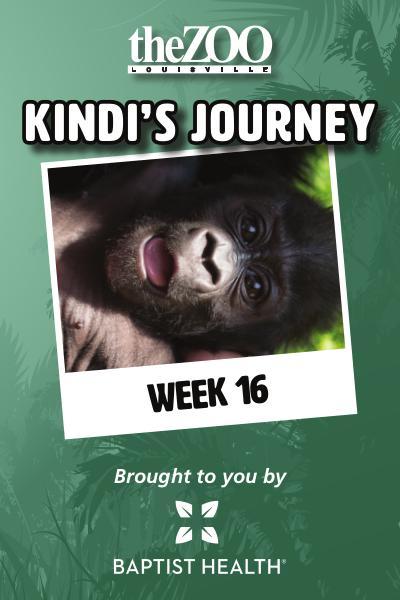 Kindi's Journey Kindi's Journey: Week 16