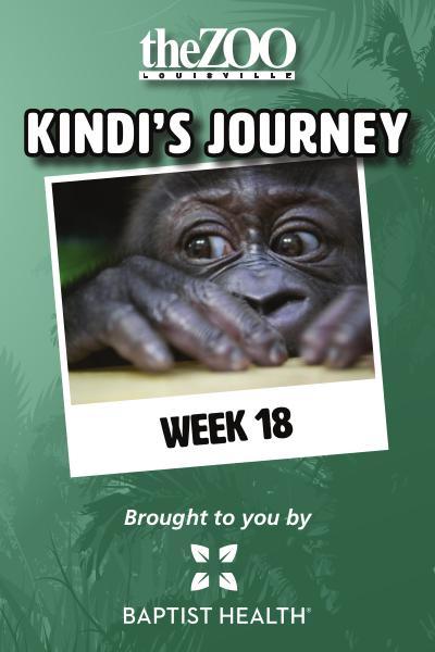 Kindi's Journey Kindi's Journey: Week 18