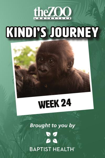 Kindi's Journey Kindi's Journey: Week 24