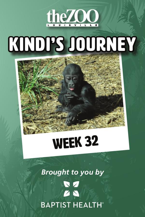 Kindi's Journey Kindi's Journey: Week 32