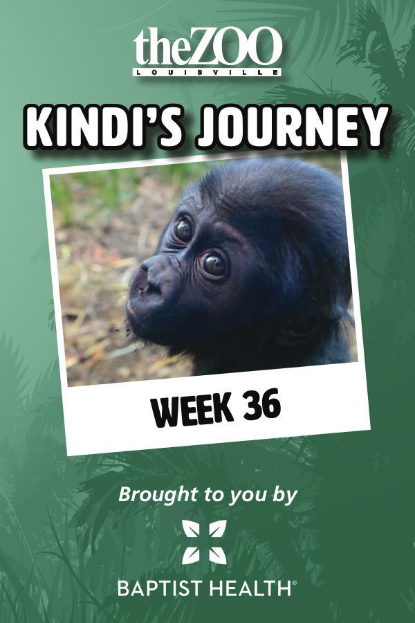 Kindi's Journey: Week 36