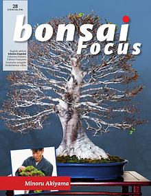 BONSAI FOCUS - Español