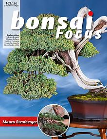 BONSAI FOCUS - English