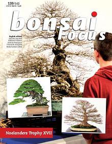 BONSAI FOCUS - English