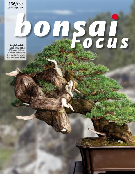 BONSAI FOCUS - English 2015-5