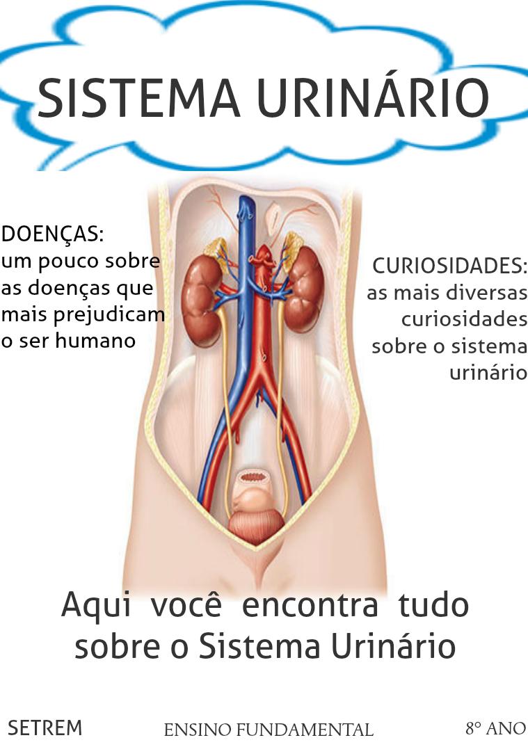 Sistema Urinário Sistema Urinário