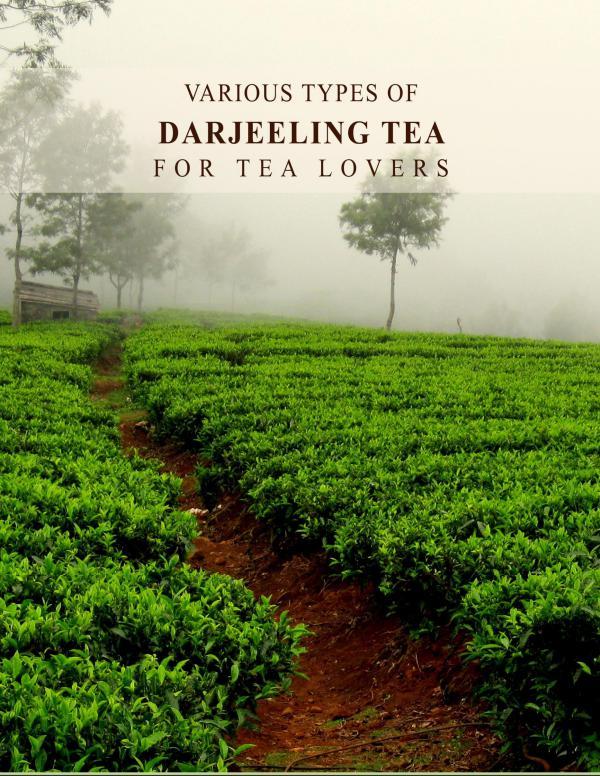 Various Types of Darjeeling Tea For Tea Lovers Various Types of Darjeeling Tea For Tea Lovers