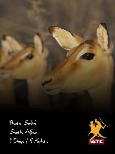 Photo Safari South Africa Version 1