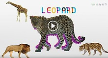 Learn Wild Animals Names and Sounds For Kids with colorful soccer bal
