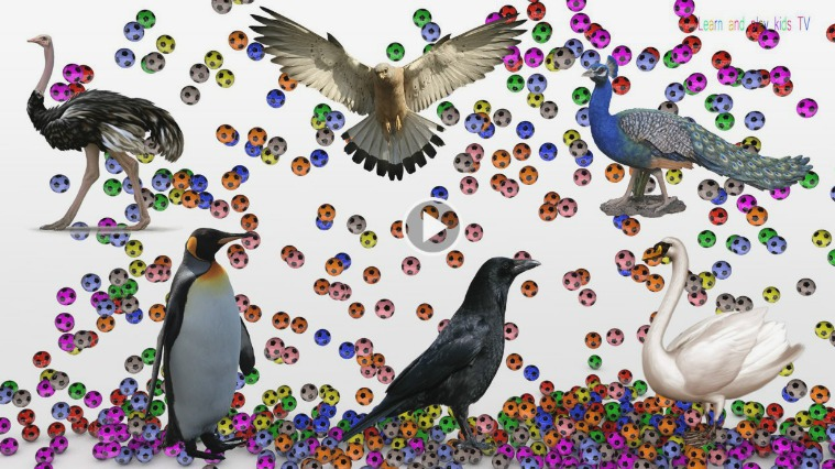 Learn birds Sounds and Names For Kids with colorful soccer balls Crow 12.-Learn birds Sounds and Names For Kids with col