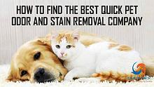 Quick Pet Odor & Stain Removal TX