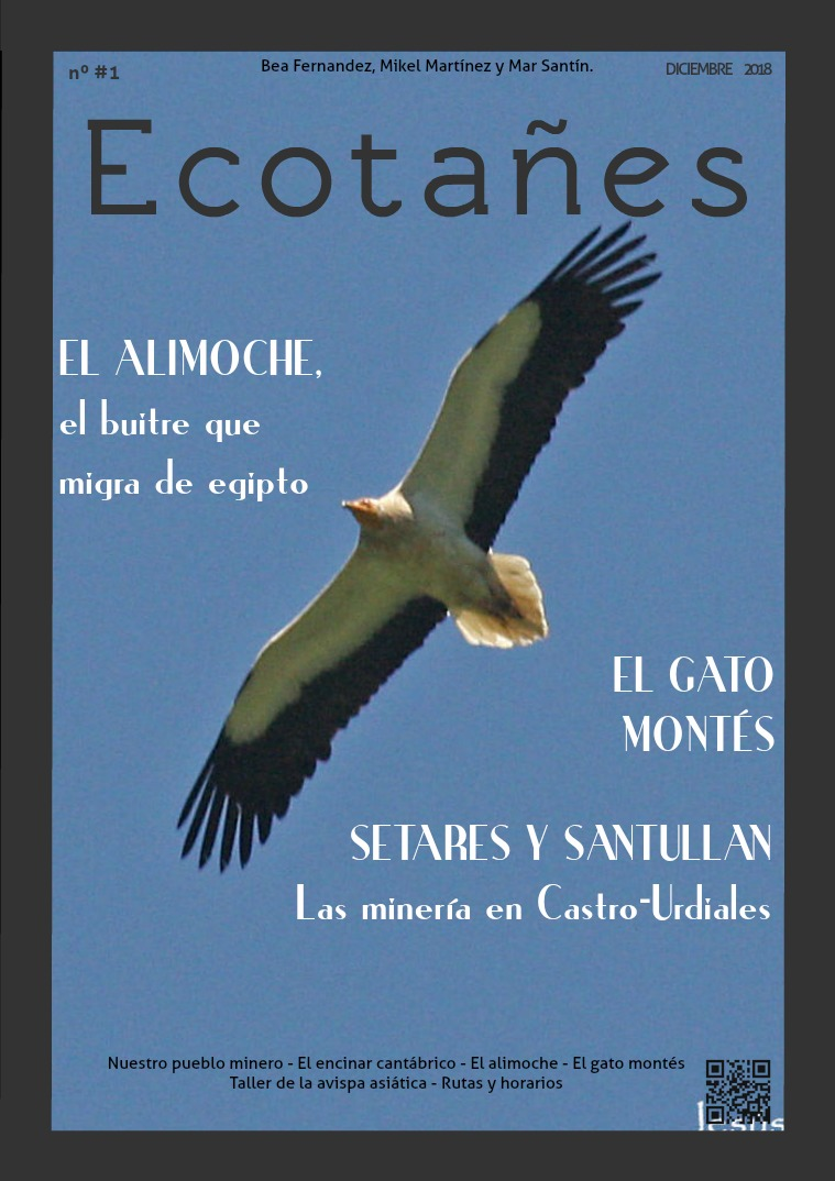 Ecotañes Ecolocados