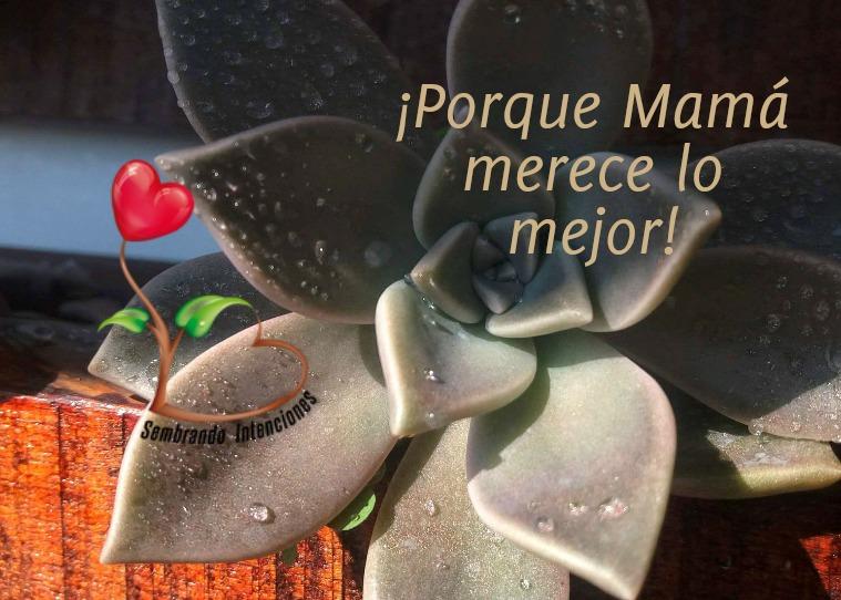 Sembrando Intenciones Catálogo Mayo 2019(clone)