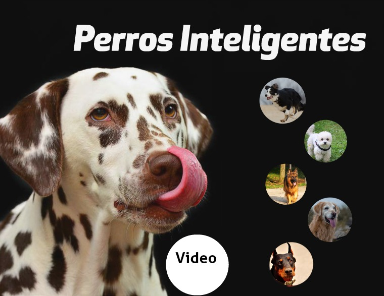 Revista Perros Revista Perros