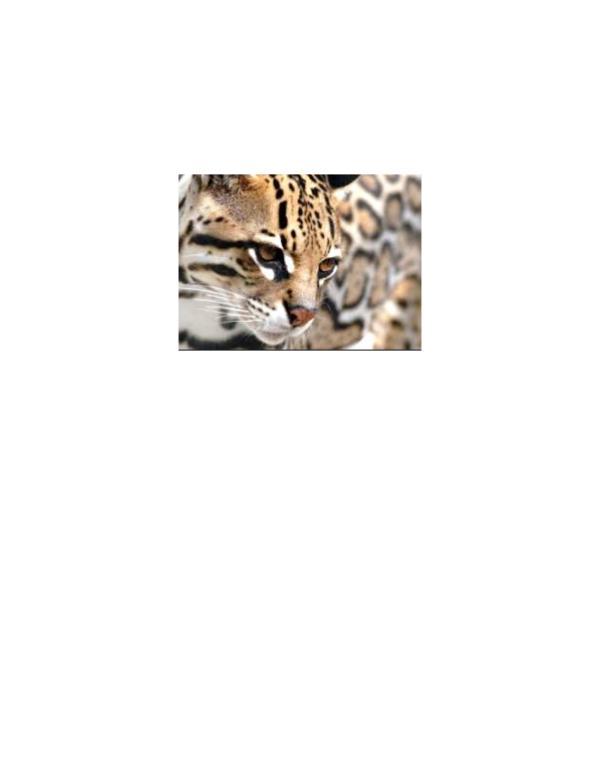 CUIDAR A LOS ANIMALES ES TAMBIÉN CUIDAR NUESTRO MEDIO AMBIENTE CUIDAR DE LOS ANIMALES ES CUIDAR TAMBIÉN DEL MEDIO