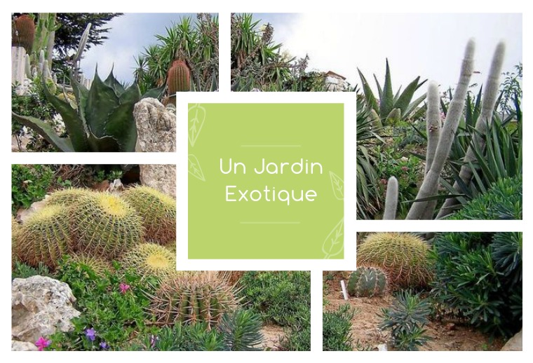 Catalogue 2020 - Un Jardin Exotique Catalogue 2020 - Un jardin Exotique